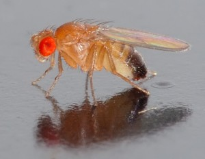 Fruit Fly removal services