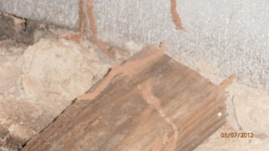 Visual effects of termites in a basement