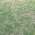Spring Yard Tips- Lawn in Murfreesboro