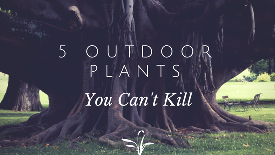 5 Outdoor Plants You Can't Kill