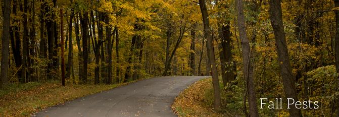 Fall Pests in Murfreesboro