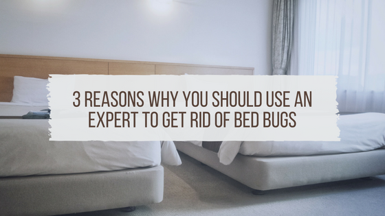 3 Reasons Why You Should Use An Expert To Get Rid Of Bed Bugs
