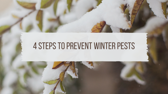 4 Steps To Prevent Winter Pests In Smyrna, TN