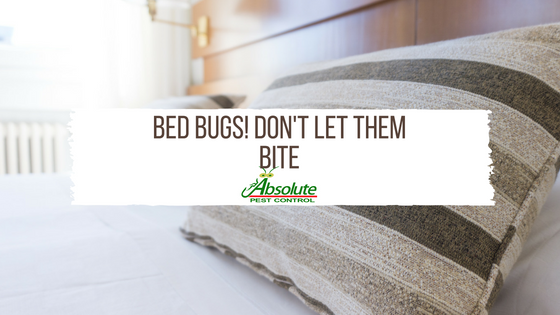 Bed Bugs! Don't Let Them Bite