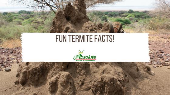 Fun Termite Facts!