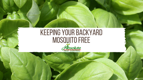 Keeping Your Backyard Mosquito Free