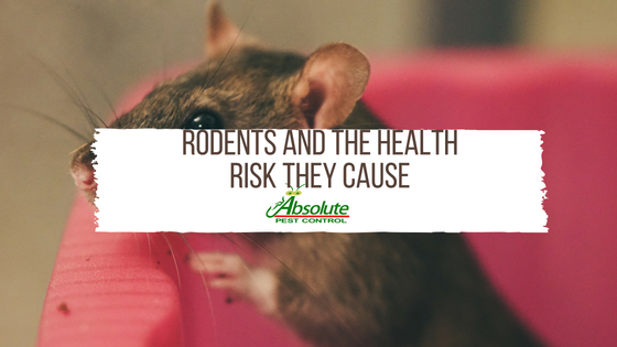 Rodents and the Health Risk They Cause