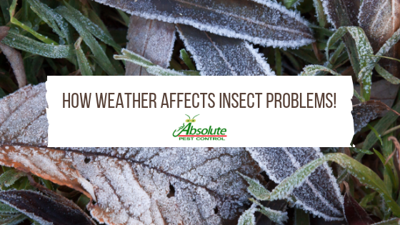 How Weather Affects Insect Problems in Smyrna, TN