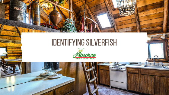 Identifying Silverfish In Your Home