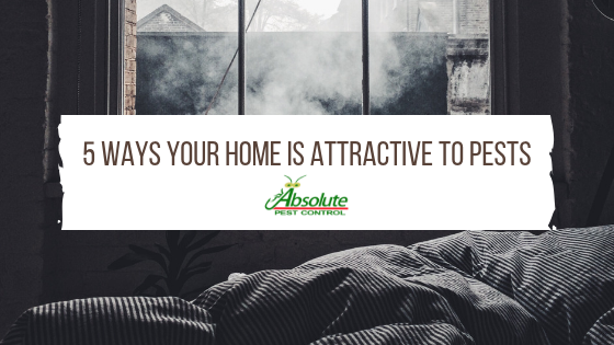 5 Ways Your Home is Attractive to Pests
