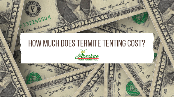 How Much Does Termite Tenting Cost?