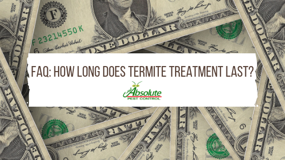 How Long Does Termite Treatment Last?