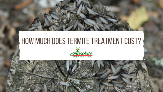 How Much Does Termite Treatment Cost Home Of Absolute Pest Control