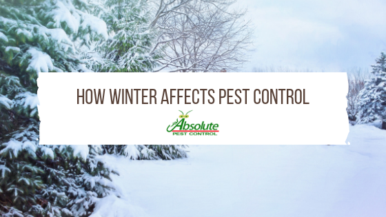 Absolute Pest Control Know How Winter Affects Pest Control Here