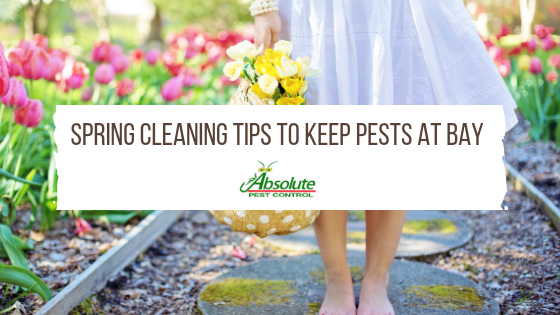 Spring Cleaning Tips to Keep Pests at Bay