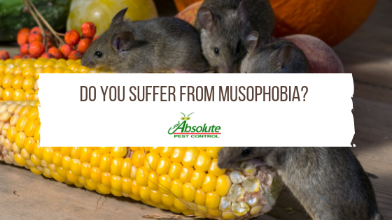 Do You Suffer From Musophobia?