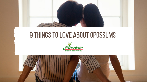 9 Things To Love About Opossums