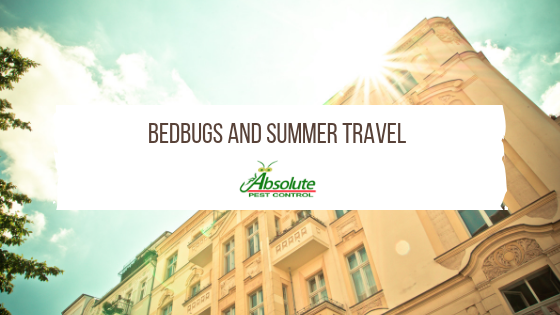 Bedbugs and Summer Travel