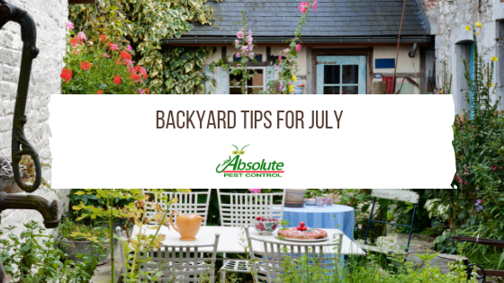 Backyard Tips For July