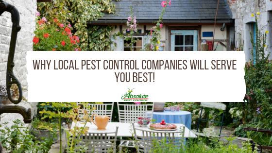 Why Local Pest Control Companies Will Serve You Best!