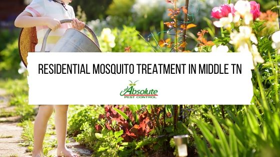 Residential Mosquito Treatment in Middle TN