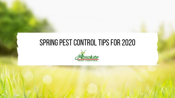 Spring Pest Control Tips For 2020