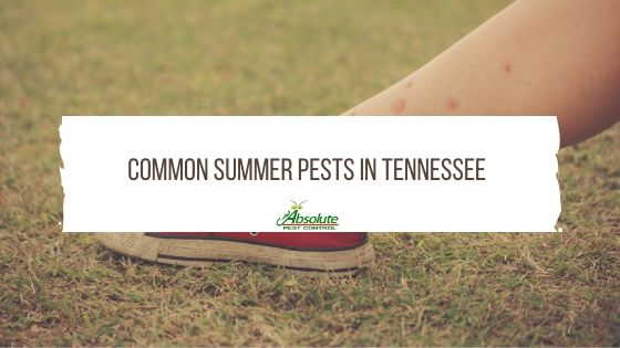 Common Summer Pests In Tennessee