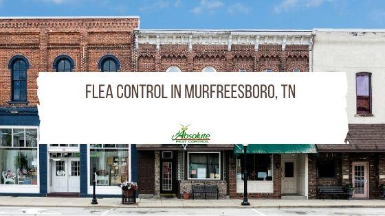 Flea Control in Murfreesboro and the Surrounding Areas