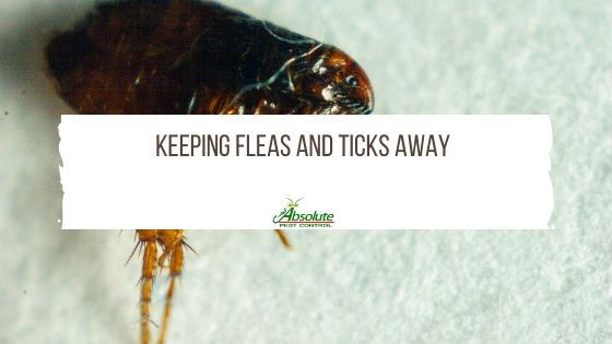 Keeping Fleas and Ticks Away