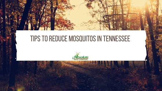 Tips To Reduce Mosquitos in Tennessee
