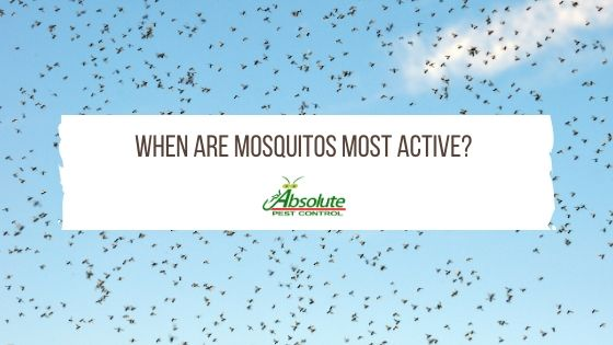 When Are Mosquitos Most Active