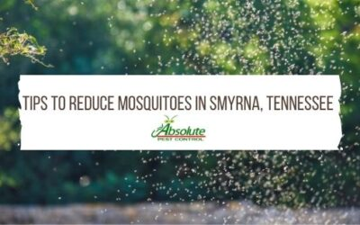 Tips To Reduce Mosquitoes in Smyrna, TN