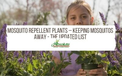 Mosquito Repellent Plants – Keeping Mosquitos Away