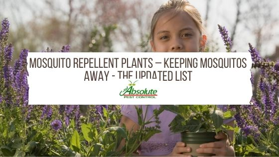 Mosquito Repellent Plants – Keeping Mosquitos Away - The Updated List