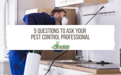 5 Questions To Ask Your Pest Control Professional