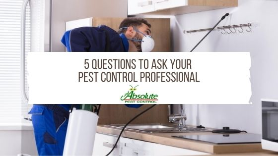 APC 5 Questions To Ask Your Pest Control Professional
