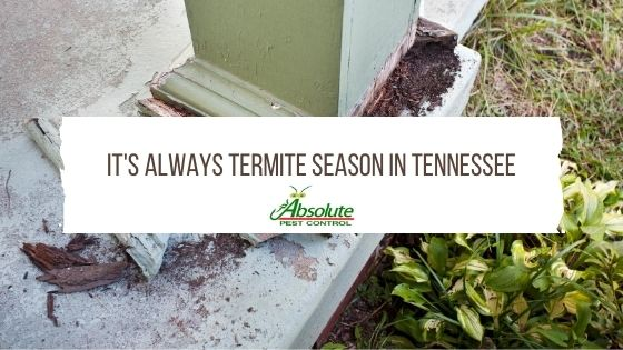 It's Always Termite Season In Tennessee