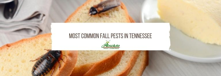 Most Common Fall Pests in Tennessee