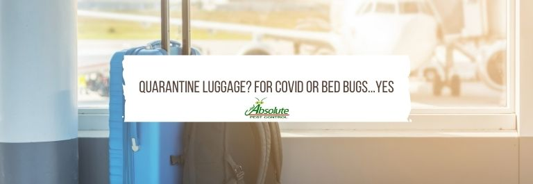 Quarantine Luggage? For Covid or Bed Bugs