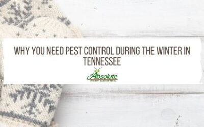 Why You Need Pest Control During The Winter In TN