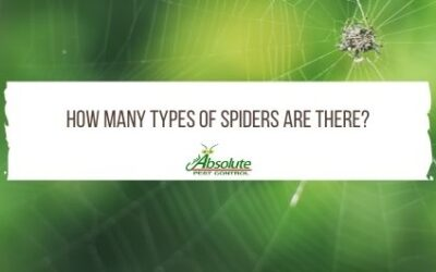 How Many Types of Spiders Are There?