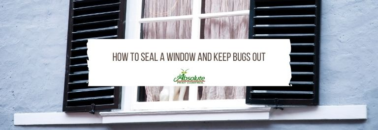 How To Seal A Window And Keep Bugs Out