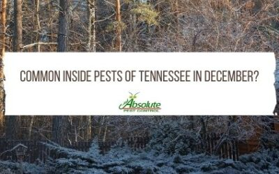 Inside Pests of Tennessee in December