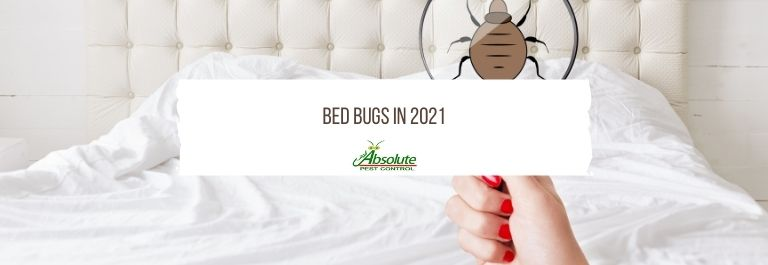 Bed Bugs in 2021