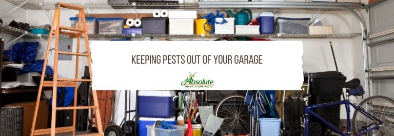 Keeping Pests Out of Your Garage
