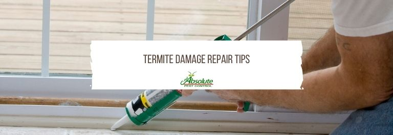 Termite Damage Repair Tips