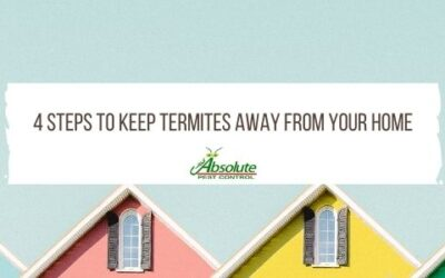 4 Steps To Keep Termites Away From Your Home