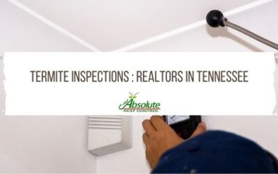 Termite Inspections : Realtors In Tennessee