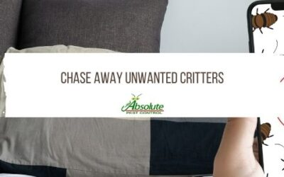 Chase Away Unwanted Critters