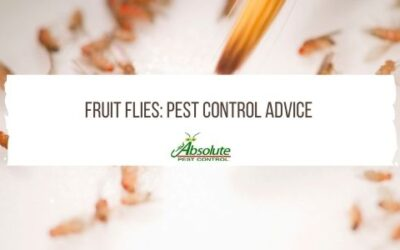 Pest Control Advice Directly From The Experts